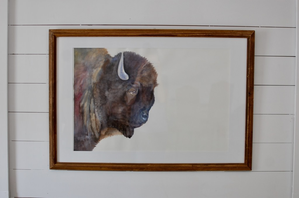 Bison Watercolor